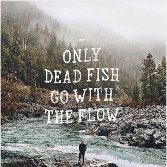 Dead fish?